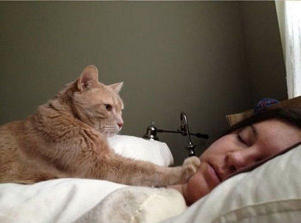 Сон выбрасывать котов