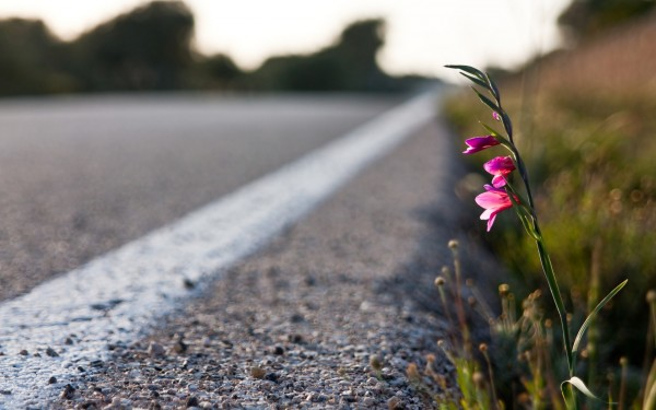 Flowers-in-the-road-4k-wide-laptop-backgrounds