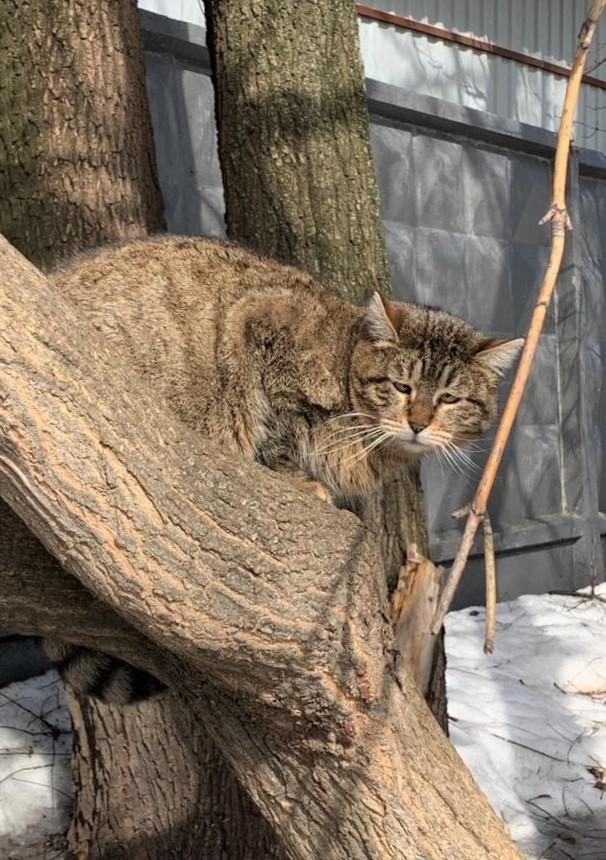 Мартовский кот. Фото моё.