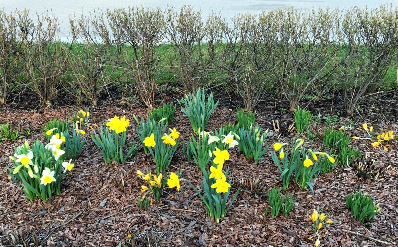 Первые цветы в Измайловском парке