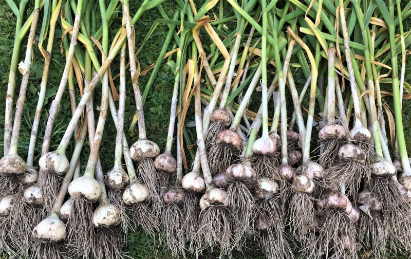 Урожай под ногами