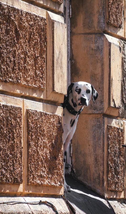 Собака. Фото моё