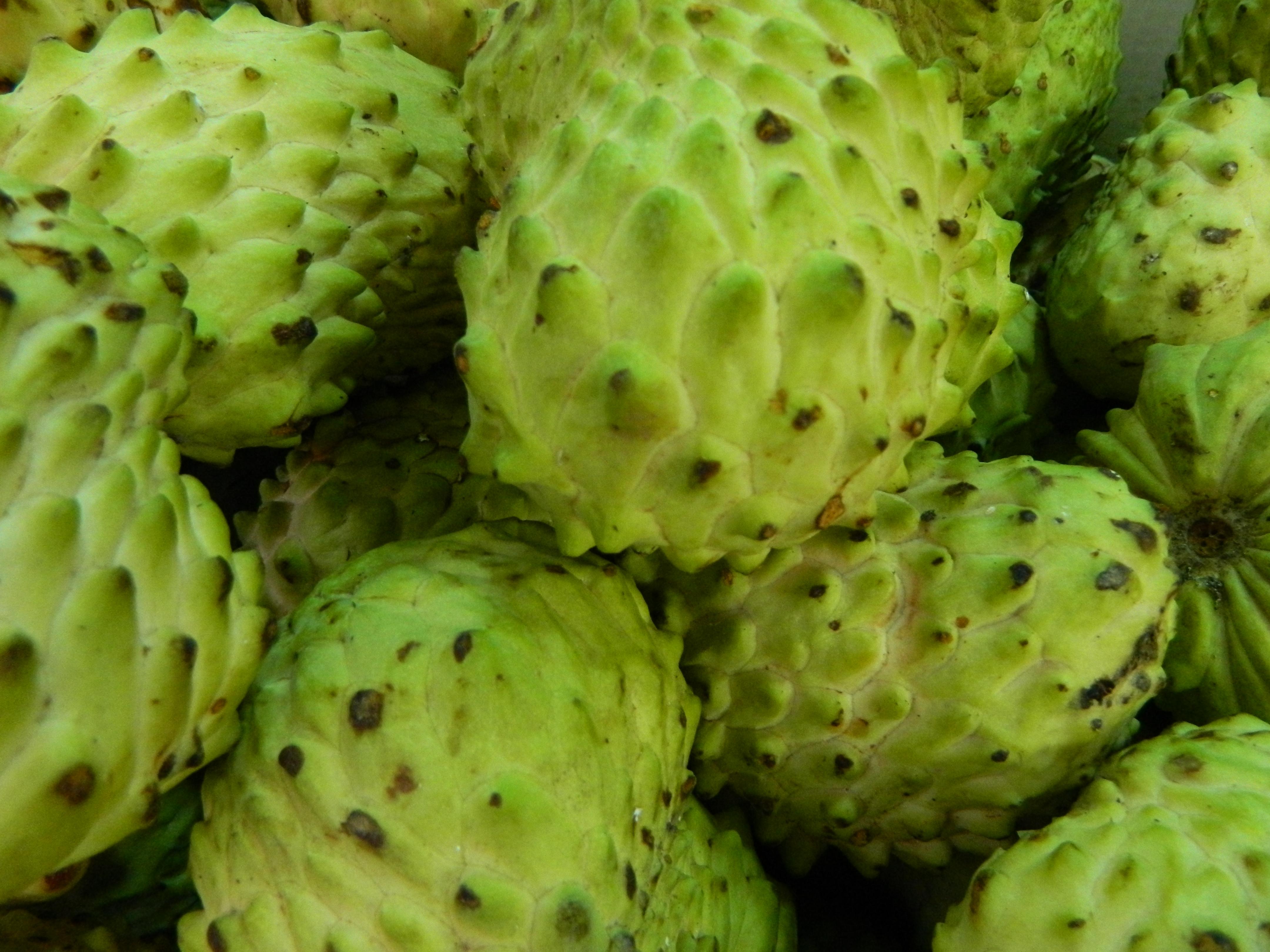 Зеленый пупырчатый овощ название и фото