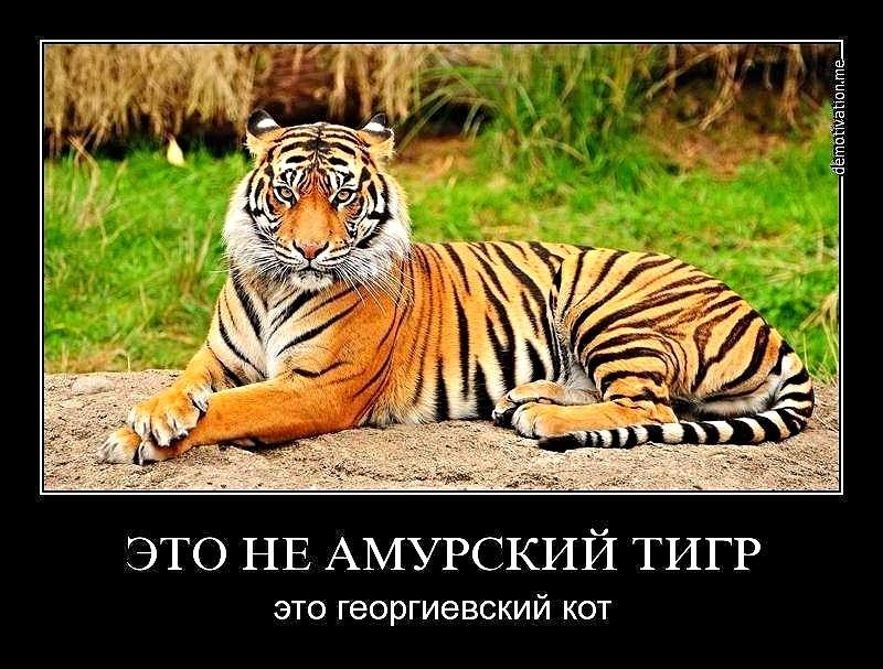 post-69627-1404813765.jpg