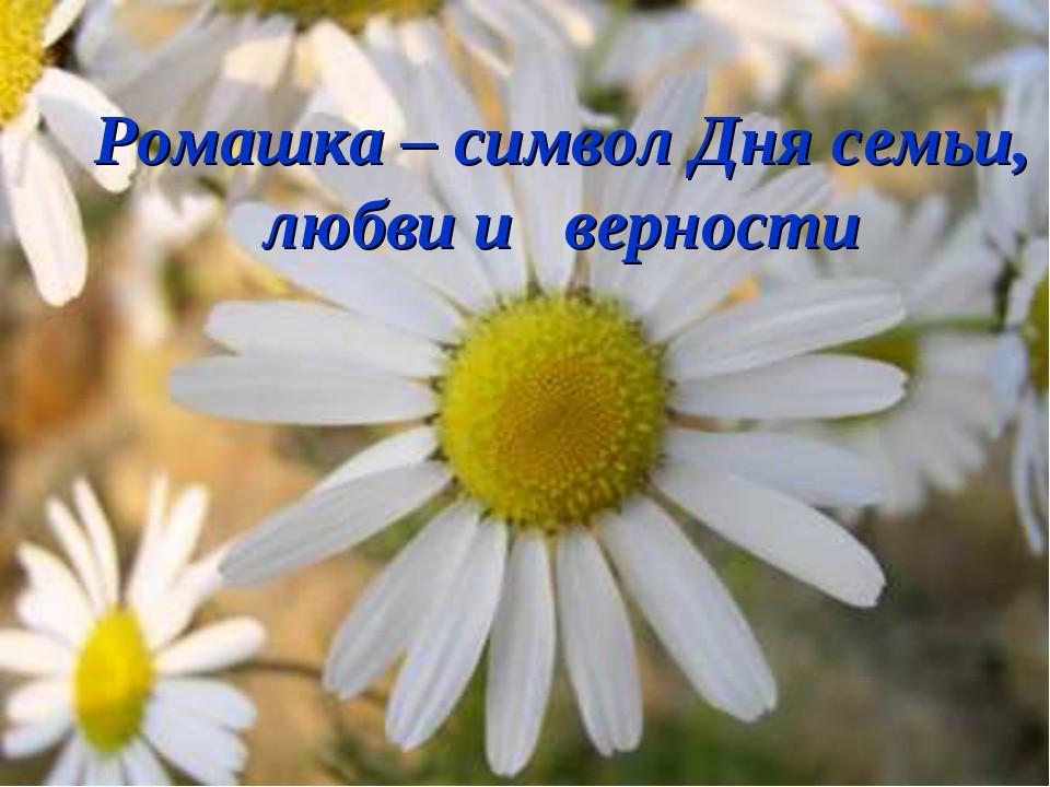 РОМАШКА -- символ праздника семьи, любви и верности )))