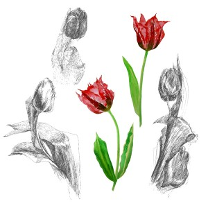 Background with tulips2-02_1