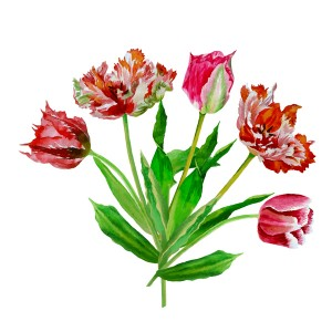 Background with bouquet of tulips-03_1