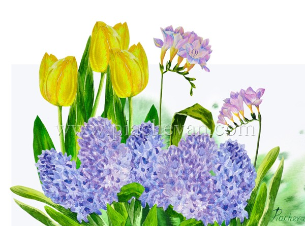 Hyacinth and yellow tulips_