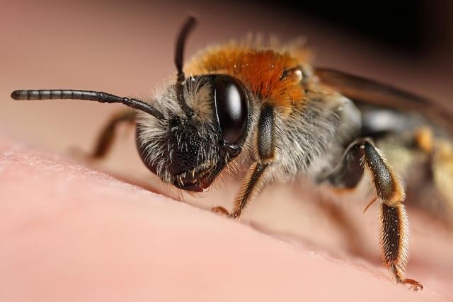макро насекомое