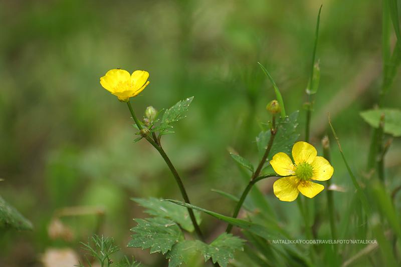 yellow-flower_9724
