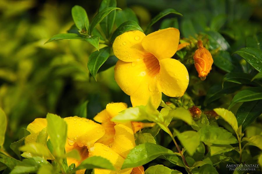 использовали при растительность вьетнама фото позволяет