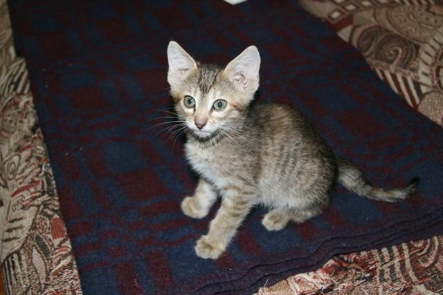 котенку нужен дом