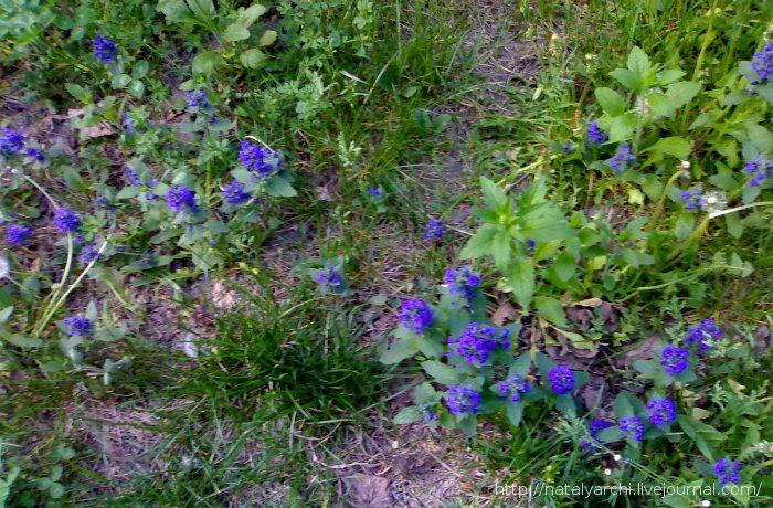 Синие цветочки_2