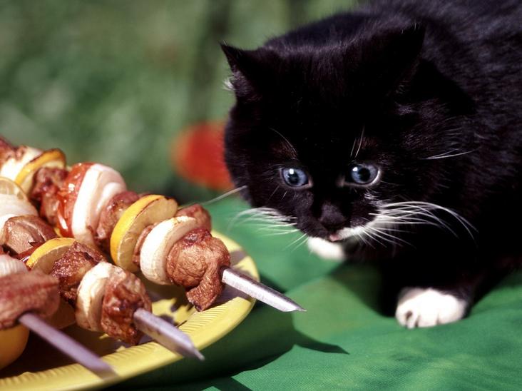 кот и шашлык
