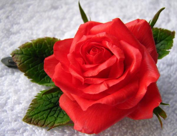 Открытки с надписью эти розы для тебя