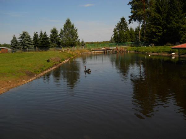 озеро и черн лебедь