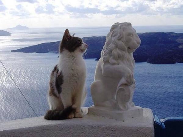 кот смотрит на льва