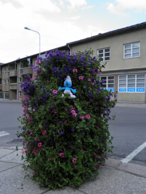 Photo of Smurf in flowers