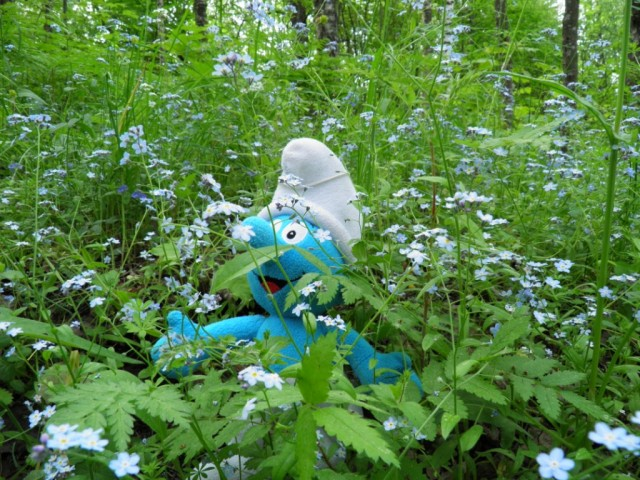 Smurf in Forget-Me-Not flowers