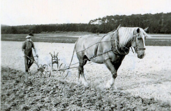 Cropped-1936-Horse-drawn-plow