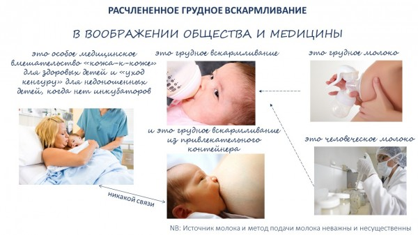 Dissected_Breastfeeding_rus
