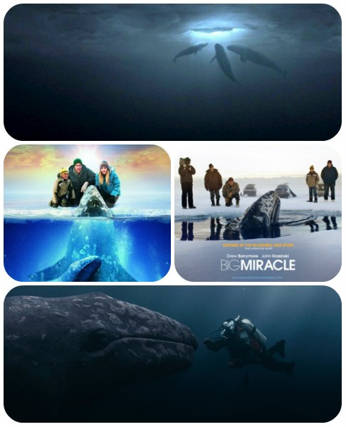 collage Big Miracle