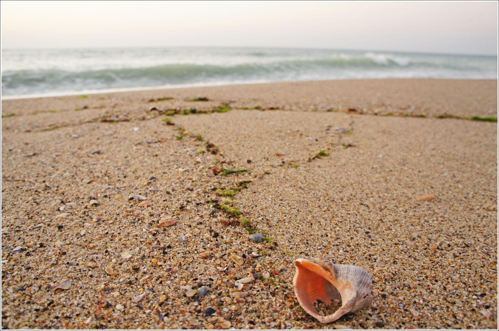 каждое утро берег усеян раковинами рапанов