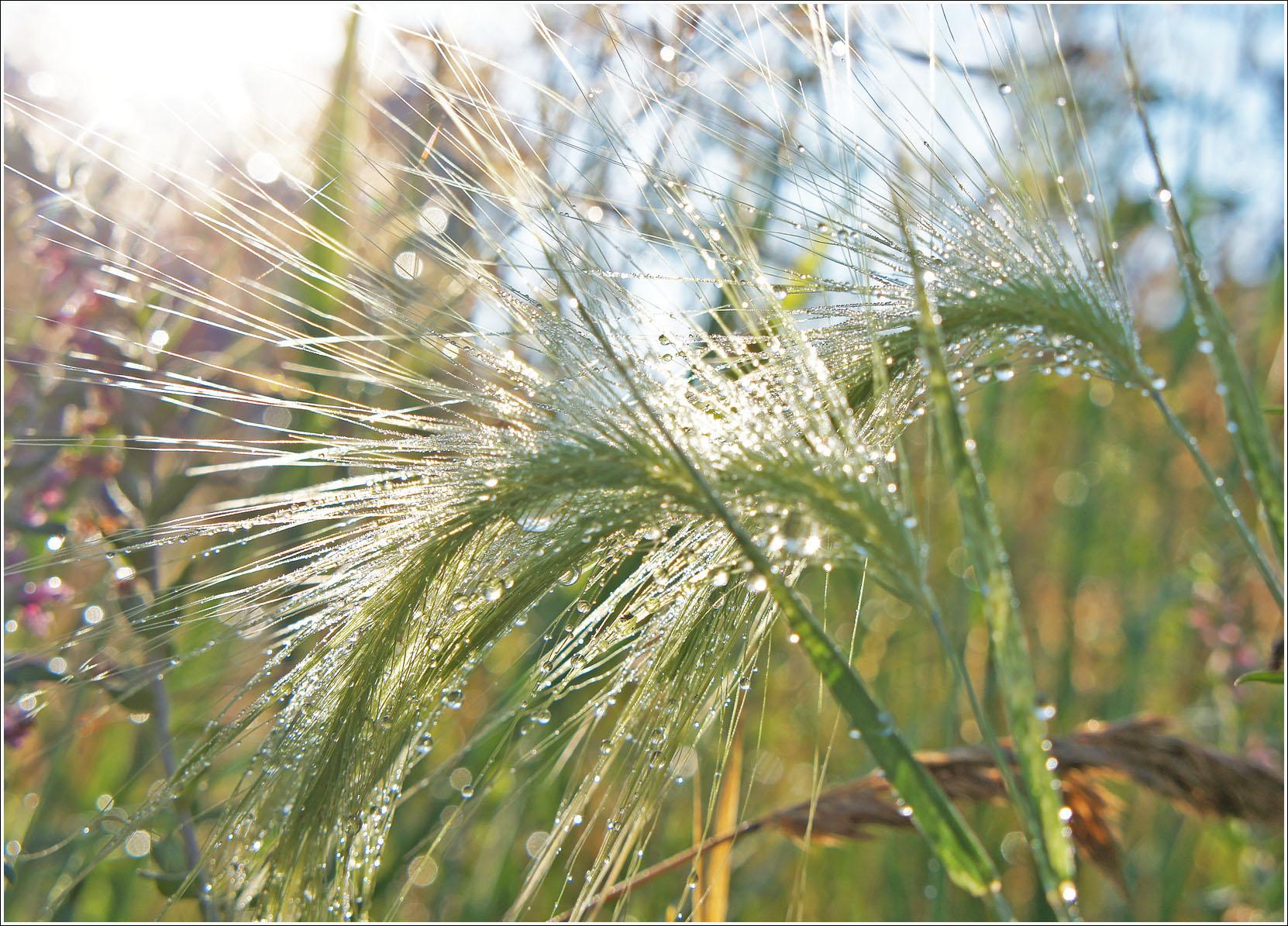 травы в утреннем солнце