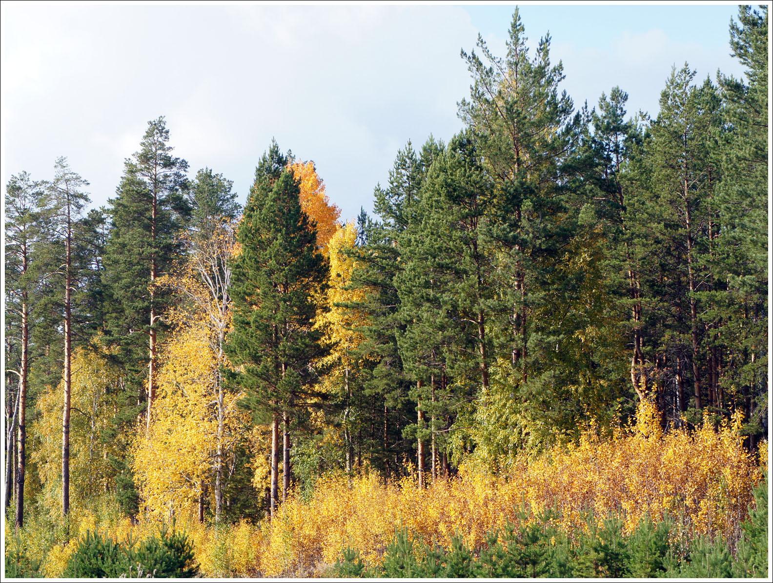 осень в золотой оправе