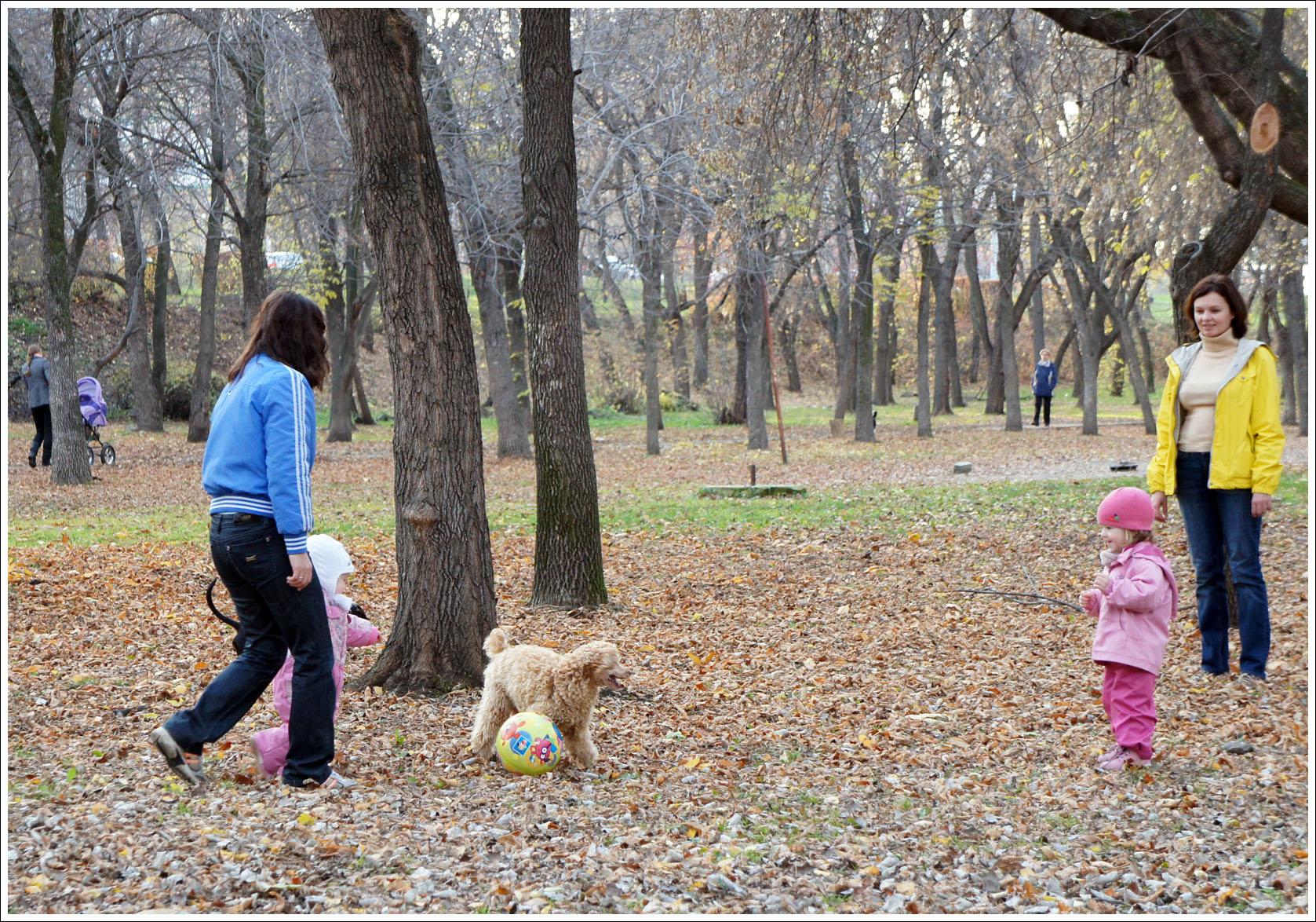 дети, собаки, парк