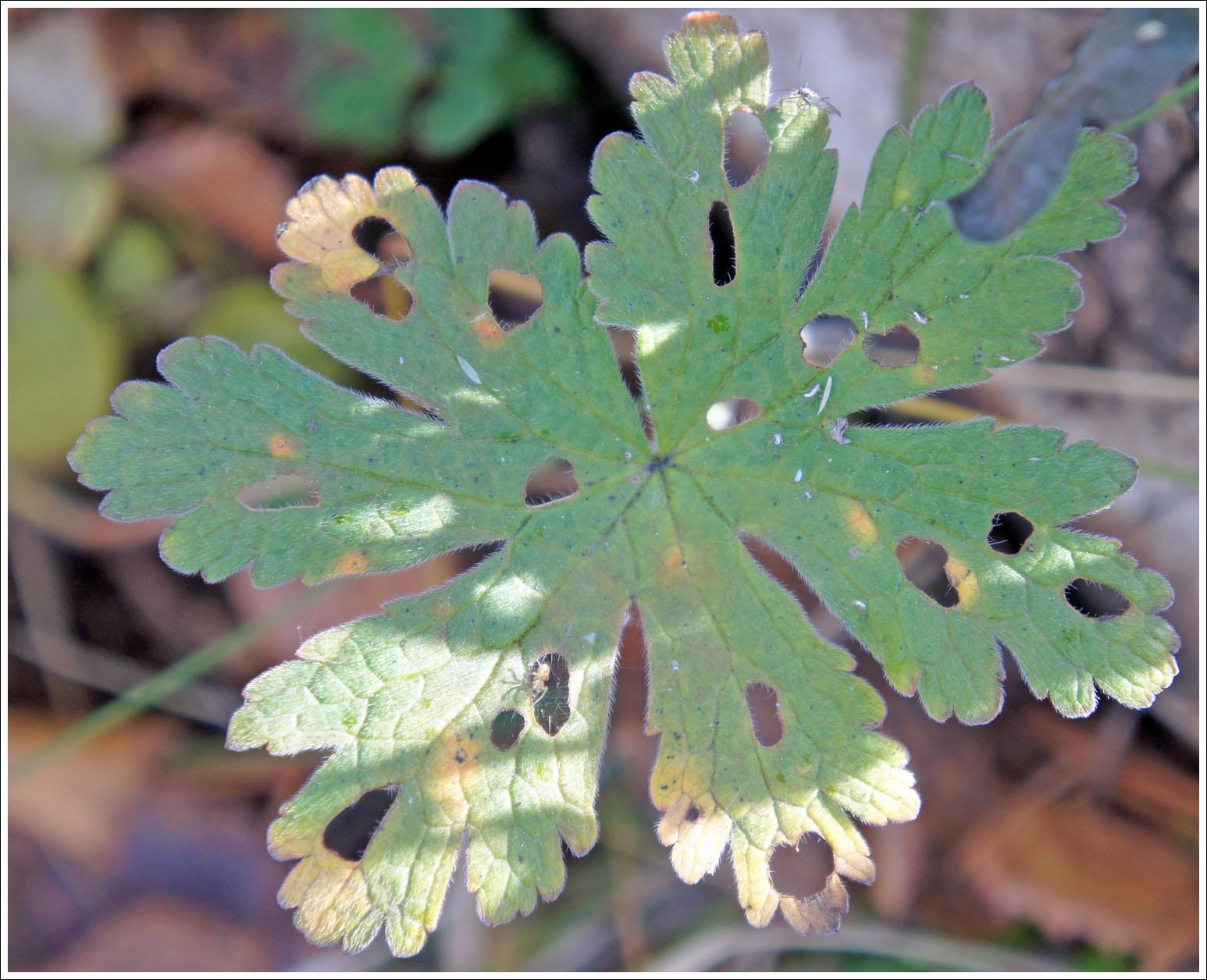 кружево осенних листьев