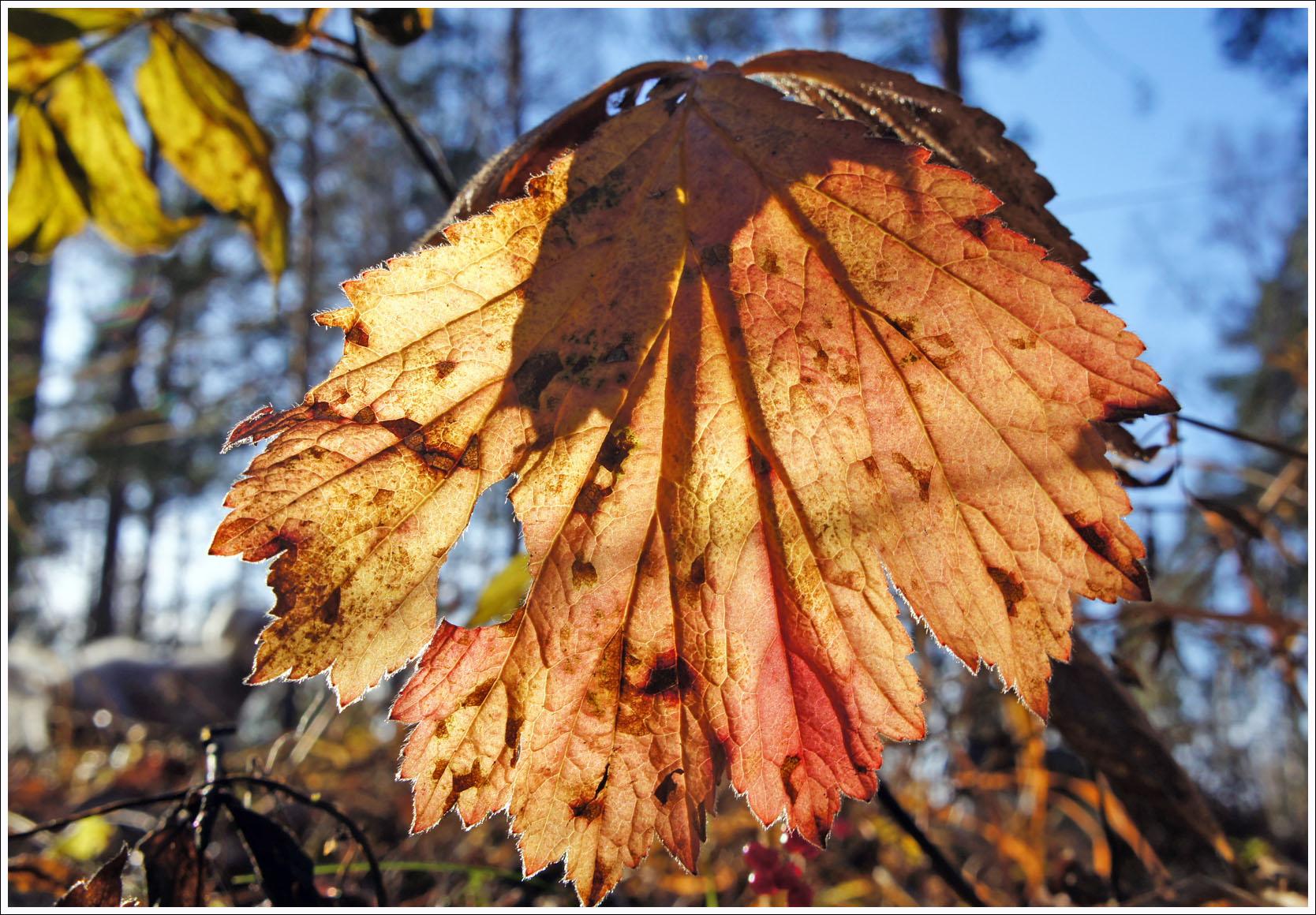 прозрачный лес, прозрачный воздух, прозрачные листья