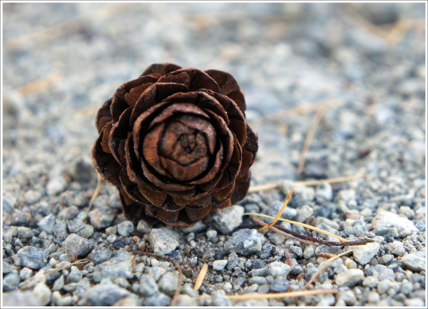 чем не роза