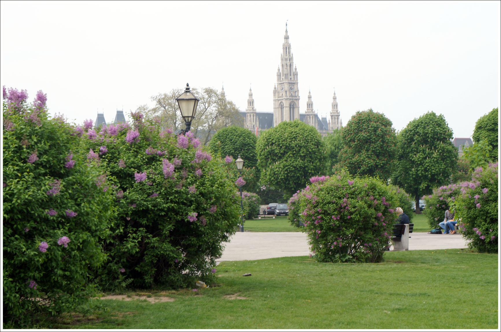 Цветущая Вена