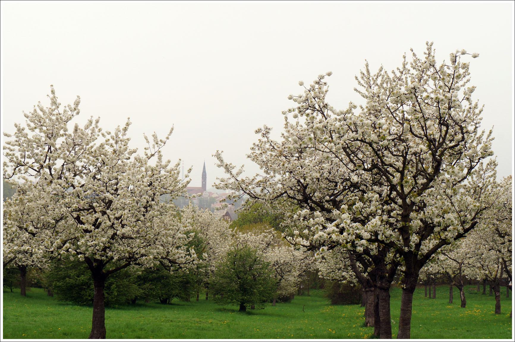 яблоневая Теплице