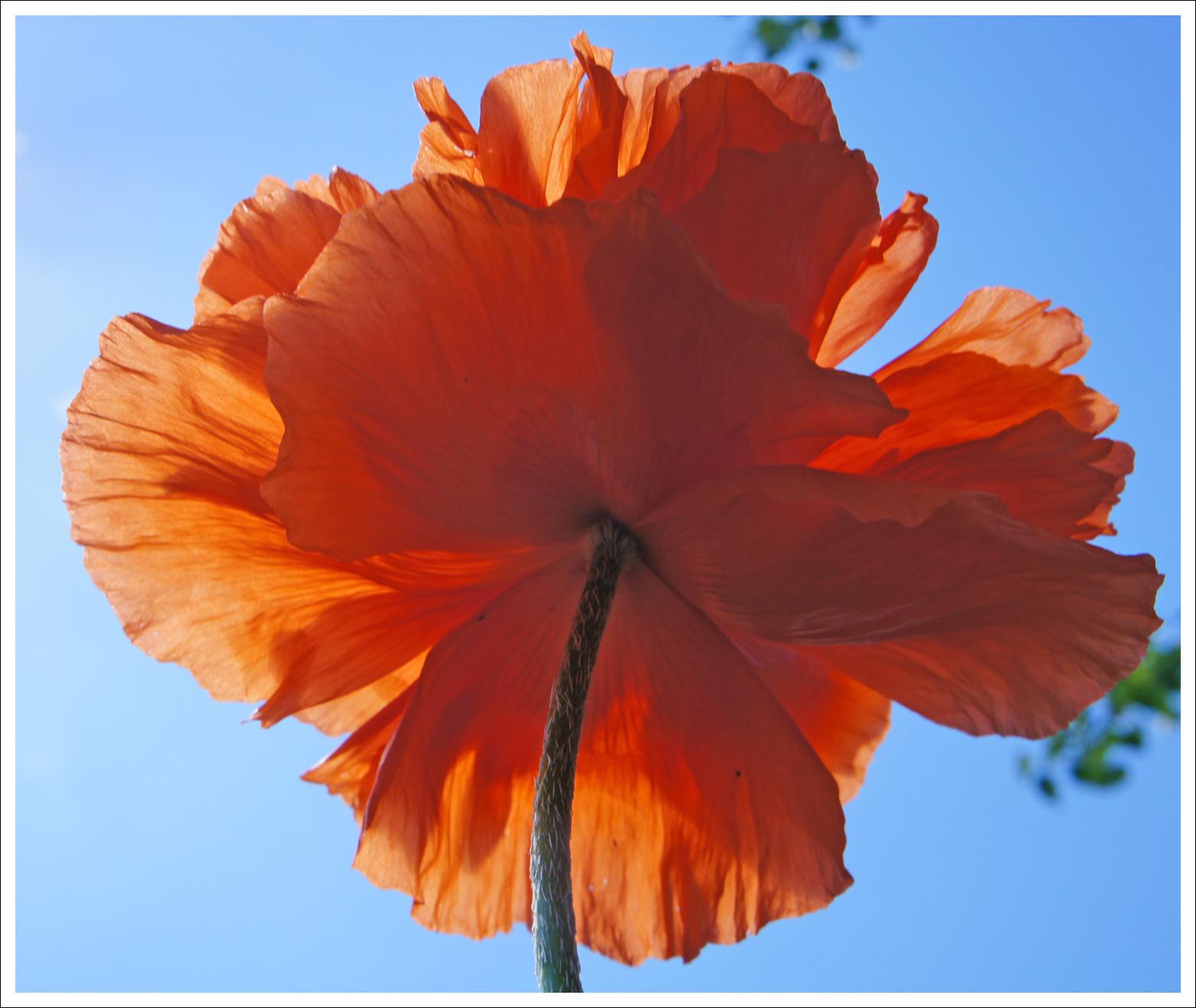 песня оранжевое небо слушать минусовка
