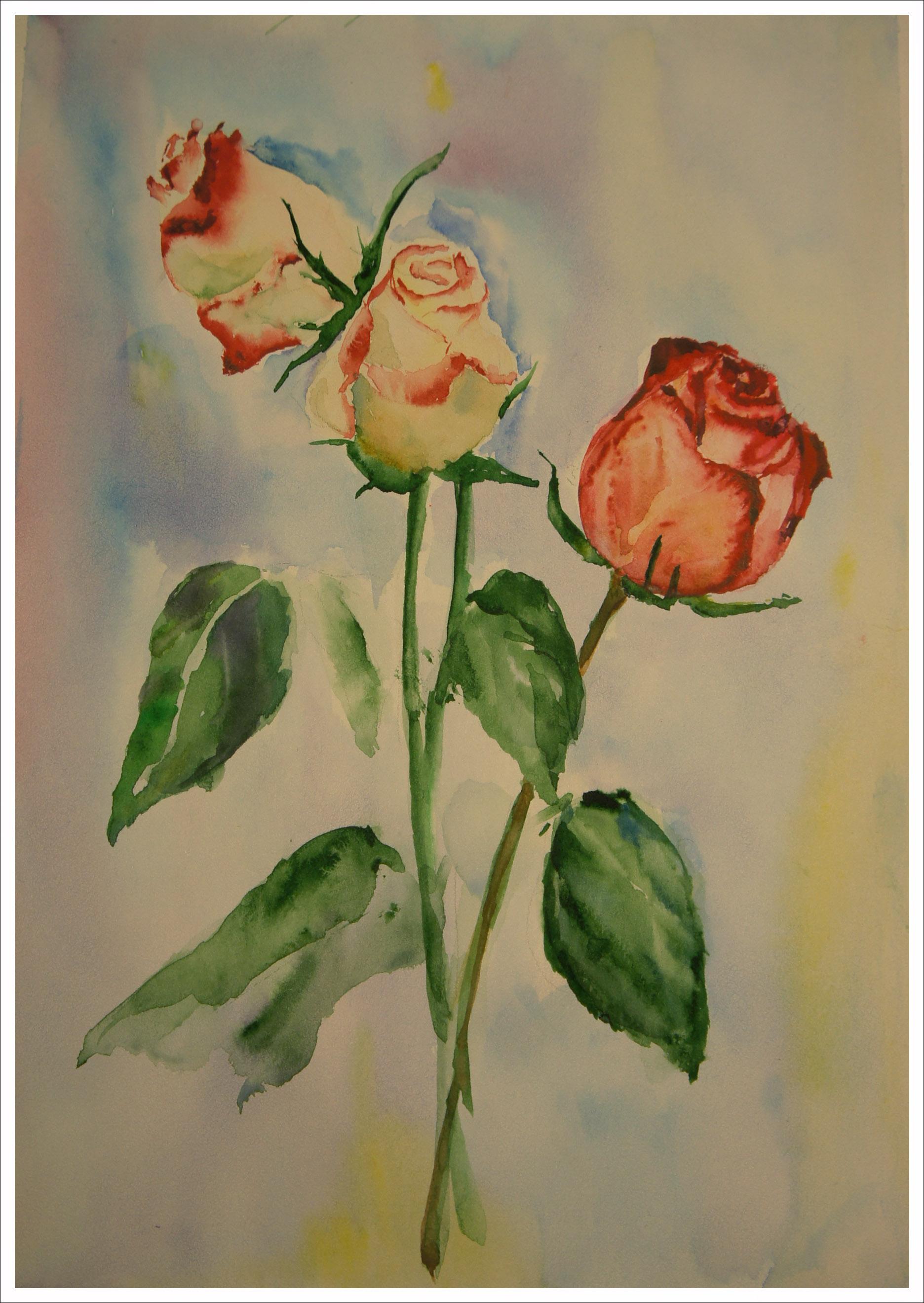 розы1