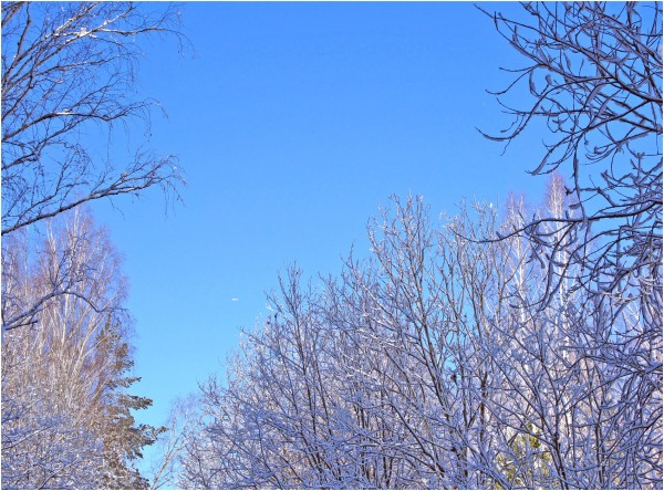 какое небо голубое.jpg