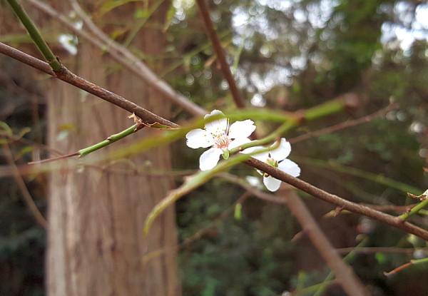 цветы _163008.jpg