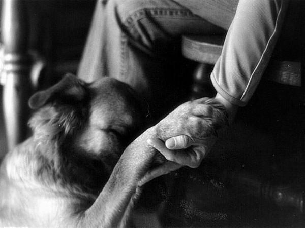 Человек и собака (1)