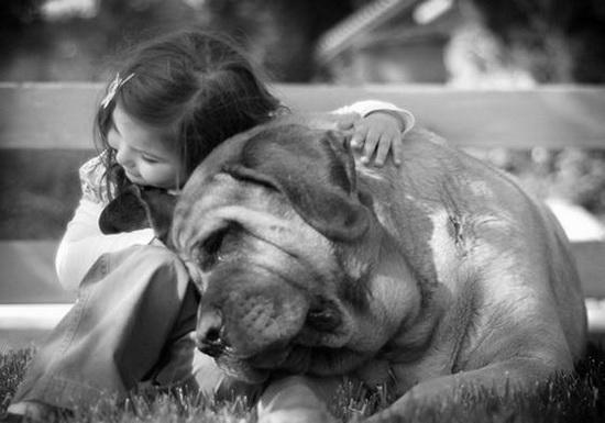 Человек и собака (15)