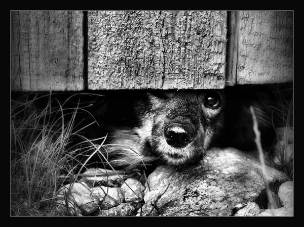 Животное... (5)