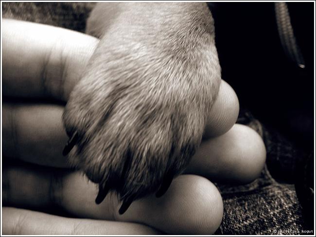 Животное... (6)