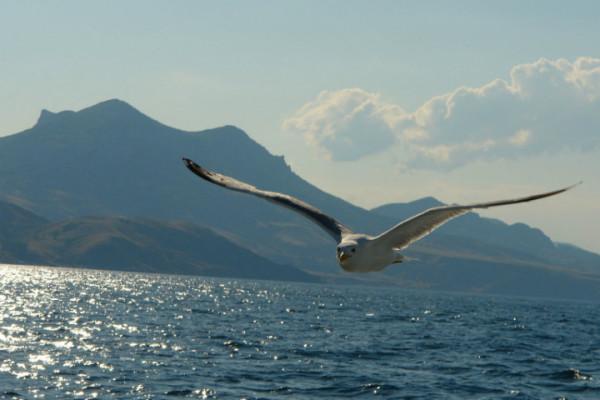 Чайка над океаном (1)