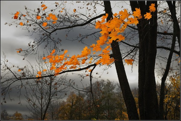 Осень (3)