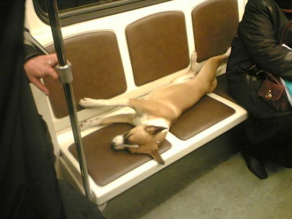 Пассажир (3)