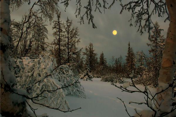 Ночь в зимнем лесу ЖЖ