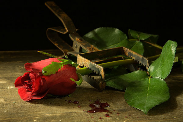 Задушенная роза ЖЖ