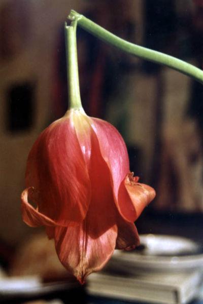Сломанный цветок ЖЖ