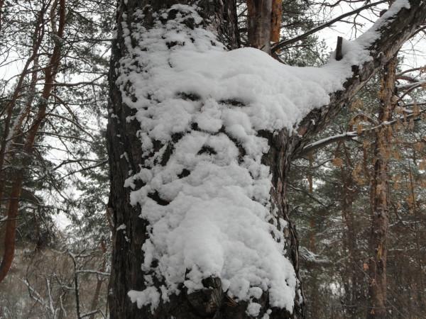 Явление природы